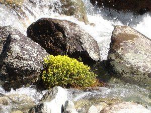 water zal stenen breken